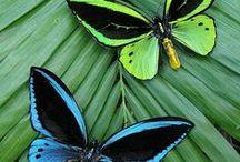 Butterflies ~