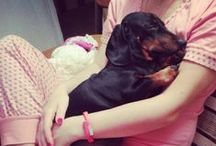 Funny animals / I have a dachshund Prada. She was 6 years old. She was born on the same day as my mom