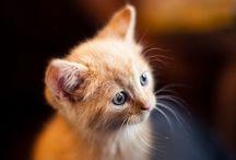 Lovely pets ❤️