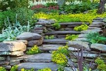 Landscaping / Ideas to add landscaping to your yard. Some of these would look great by a pool!