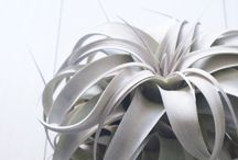 Designs for the nest / Designs for the nest