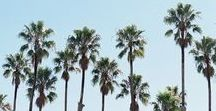 palm trees ▽