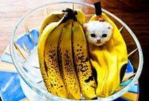 Funny Kitties