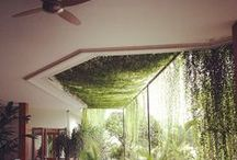 jungle indoors