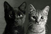 CREATURES : Cat