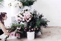 BOTANICAL : Floral