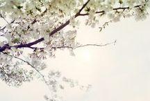 Mooie foto's! / Prachtige bloemen en vlinders