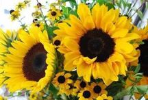 Flowers--Sunflowers & Daisies / by Nancy Streukens