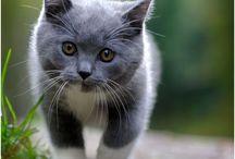 Cats / Cat pets