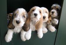 Dogs / Dog pets