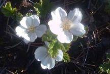 Kukkia kukkia kesäkukkia