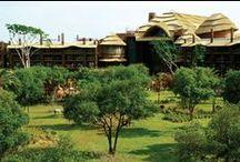 Disney's Animal Kingdom Lodge - Clippers Quay Travel / Walt Disney World Resort, Disney Resort Hotels - Disney's Animal Kingdom Lodge