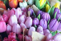 Floral beauty / Kukkia, ruukkuja, kukkaistutuksia, ideoita