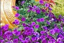 Flower Gardening / by Janet M. Wilson
