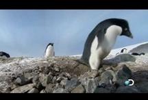 Penguins / by Tonnya Helmuth Beck
