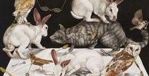 Kate Bergin - Animal Kingdom / Kate Bergin - Animal Kingdom