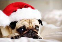 Christmas Dogs / Christmas Dogs