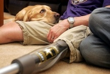 DOGS WITH JOBS / Faithful friend, protector, life-saver… these are just a couple of the jobs that man's best friend does unconditionally.  This board shows some of the wide variety of skills or the love that dogs share on our behalf.