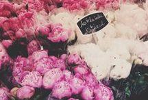 Florals / www.marrymecharlie.com