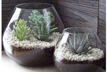 cactus , succulents , joubardes etc...