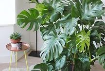 Monstera spaces