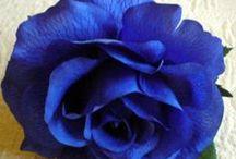 Flower arrangement -Virágkötészet