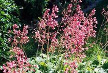 Garden: Shade Flowers
