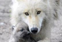♥ My Favorite Animals ♥