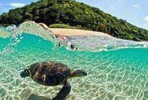Hawaii / Hawaii is awesomeness