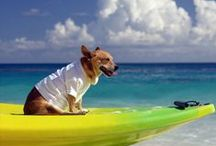 Jet Set Pets / Travel tips and products for your pets on-the-go