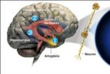 Health - Brain / Info about the brain. Brain diseases and behaviors that affect the functioning of the brain