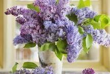 záhrada , kvety...