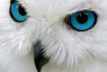 Owls / Owls tend to look wise & mysterious, as if they know something you don't. Owl is the symbol of wisdom.