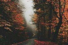 It's autumn time tosh