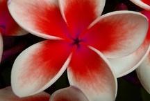 Esistono le piante perfette? / Alcune delle piante più belle che la Natura possa creare