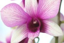 Il fascino delle orchidee / Una raccolta delle più belle #orchidee in circolazione