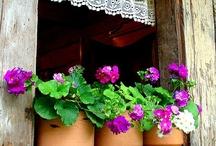 Storie di finestre e porte fiorite... / Dettagli di finestre, porte, cancelli decorati con sorprendenti piante e splendidi fiori
