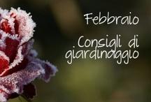 Consigli di giardinaggio / Cosa fare in giardino, nell'orto e nel frutteto e di quali cure hanno bisogno le tue piante nei diversi mesi dell'anno, leggi tutti gli articoli su www.bakker-it.com