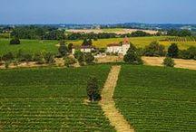 Tourisme viticole / Le charme irrésistible des vignobles du Sud-Ouest de la France. Un week-end en Armagnac, des vacances au cœur des vignes de Gaillac, un périple à travers l'appellation Cahors : Midi-Pyrénées déploie pour vous ses vignobles comme autant de jardins raffinés, secrets ou dépaysants.