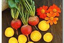 2013 Veggie Varieties at LaFarm / Check out what we grew this season at LaFarm!