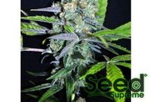 MARIJUANA STRAINS / by Seed Supreme