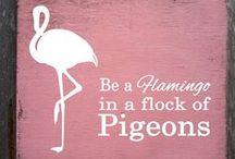 Flamingos S2