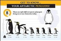 Infographics / Infographics  - Penguin Suits, an award-winning, client-centered, marketing and advertising agency, believes every business has a story to tell. As experienced and creative authors of great brand messages, we tell businesses' stories to the world. At Penguin Suits, we take the time to learn each client's story and strategically brand all our clients marketing messages.