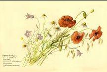 Edith Holden art