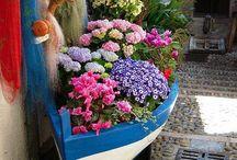 Jardins / Plantas que eu gostaria de ter em casa