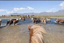 """Entre les oreilles de mon cheval... / Les plus beaux paysages sont ceux que l'on voit entre les oreilles d'un cheval ! Voici une sélection de ces photos prises """"en immersion""""... http://www.randocheval.com/"""