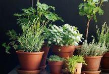 Garden / Open spaces / Green