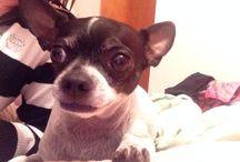 Lily / Pet dog