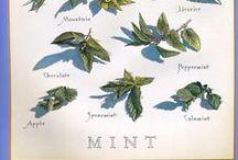 Mint(tu)