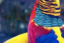 Aves / Kinds of birds, I prefer the exotic, beautiful brightly coloured varieties.  Australian parrots, flamingos and other coloured feathered friends
